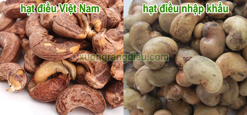 Cách nhận biết phân biệt hạt điều Việt Nam và hạt điều nhập khẩu