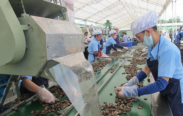 Quy trình sản xuất đóng gói hạt điều thành phẩm theo yêu cầu